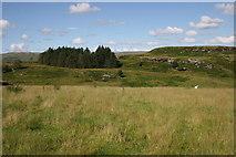 NS5876 : Small plantation, Craigmaddie Muir by Richard Sutcliffe