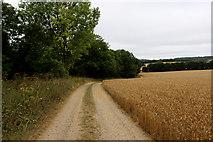 TR0047 : North Downs Way beside Skeat's Wood by Chris Heaton