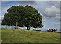 SO3830 : Ponies on Ewyas Harold Common by Hugh Venables
