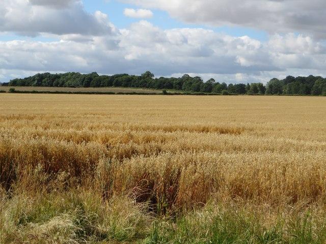 Arable land at Hutton Mains