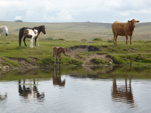 Dartmoor National Park - spot the odd one out