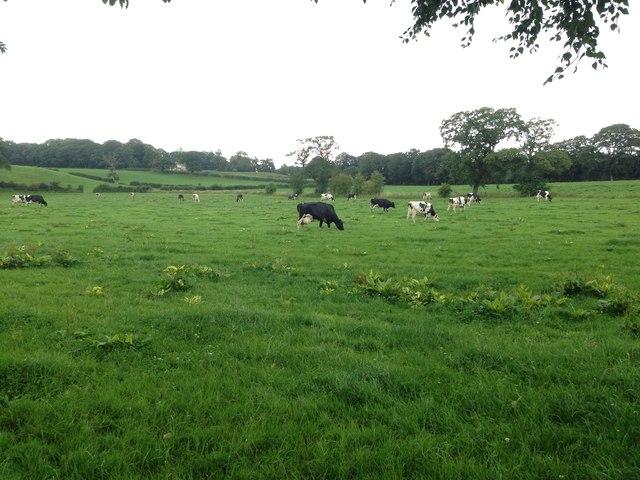 Farmland, Ruleholme