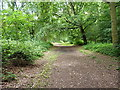 SJ5510 : Botany Bay plantation by Richard Law