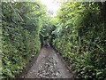 SS6338 : Road to Button Bridge by Hugh Craddock
