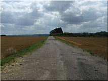 TL1435 : Track to The Spinney by JThomas