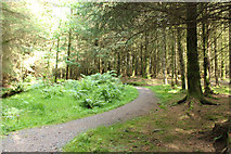 NX4465 : Trail in Kirroughtree Forest by Billy McCrorie