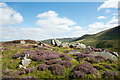 NY2430 : Rocks and flowering heather at Watches by Trevor Littlewood