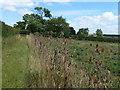 TF0702 : Fenced footpath near Southorpe by Richard Humphrey