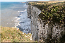 TA1974 : Bempton Cliffs, Yorkshire by Christine Matthews