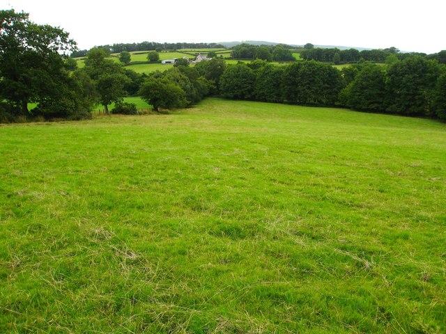Pasture and woodland north of Wern-Shade