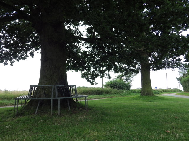 'Neath the Spreading Oak