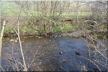 SD7186 : River Dee by N Chadwick