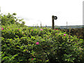 SE0721 : Overgrown footpath at Bilberry Hall Farm by Stephen Craven