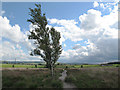 SE0621 : Solitary birch tree on Norland Moor by Stephen Craven