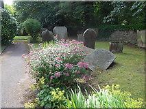 SK2375 : St Martin, Stoney Middleton: churchyard (A) by Basher Eyre