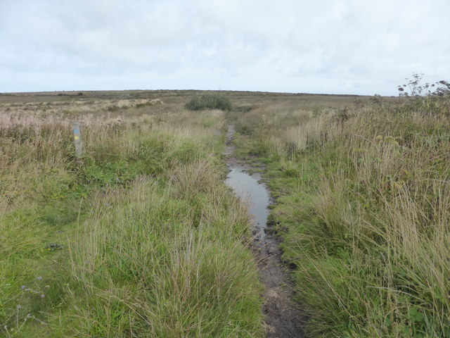 Boggy track on Lady Downs
