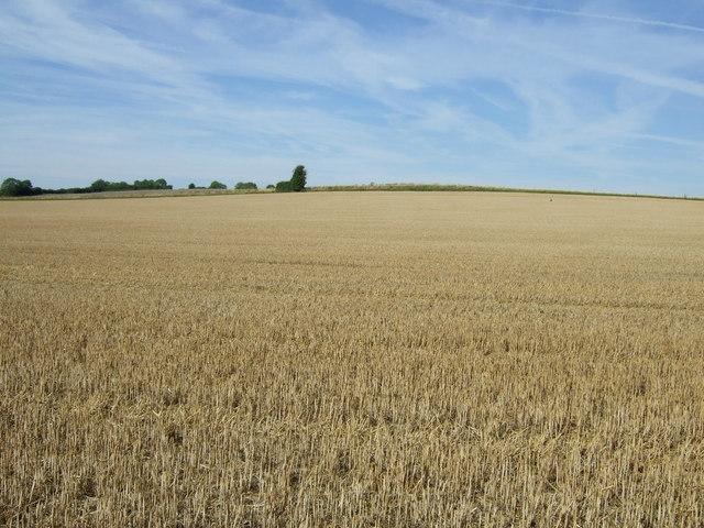Stubble field near Campton