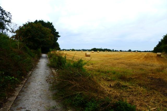 Farmland by Moor Lane Bridge