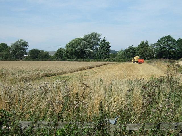 Harvest time near Brookside Farm
