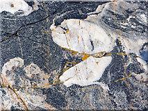 NH7762 : Rock surface, Black Isle coast by Julian Paren