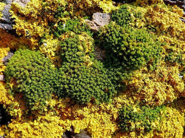 Lichen and coastal plants, Black Isle