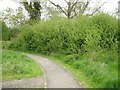 SP2965 : Thicket of a plum family member, Myton Fields, Warwick by Robin Stott