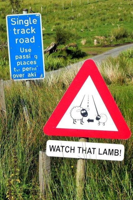 Watch that lamb!