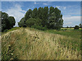 TL5371 : Path along the River Cam bank by Hugh Venables