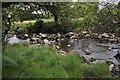 SX5381 : West Devon : The River Tavy by Lewis Clarke