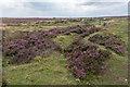 SE7194 : Rosedale Chimney Bank, North Yorkshire Moors, Yorkshire by Christine Matthews
