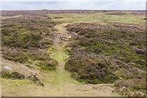 SE7294 : Moorland, Rosedale Chimney Bank, North Yorkshire Moors, Yorkshire by Christine Matthews