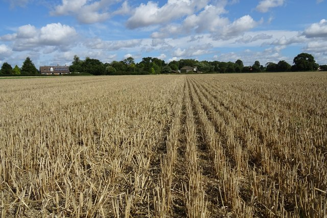 Harvested wheat field at Harleston