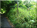 SJ2559 : Sign for completely overgrown footpath by Maggie Cox