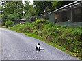 SX6773 : Badger's Holt - chicken coops and predator by Chris Allen