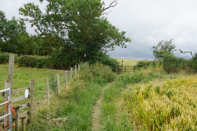 Meeting of paths and fields