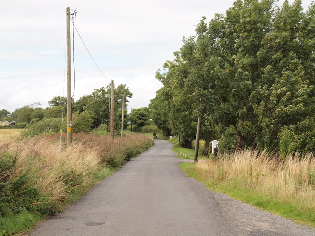 Country Road and Telegraph Poles