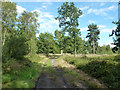 SU9666 : Bridleway on Chobham Common by Robin Webster