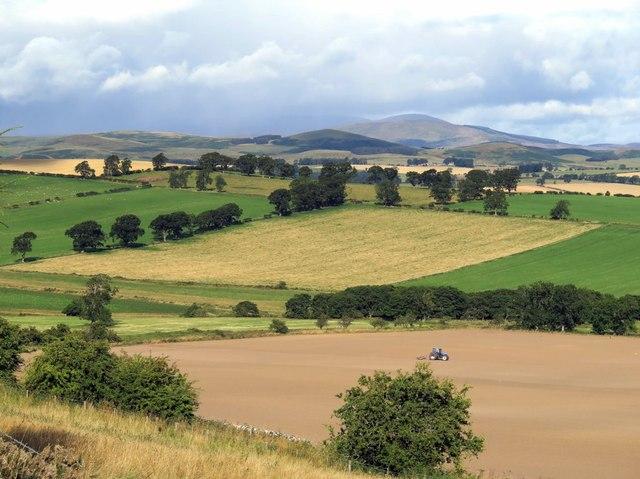 Farmland north of Thrunton Wood