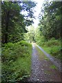 SX4371 : Track in Hatch Wood by David Smith