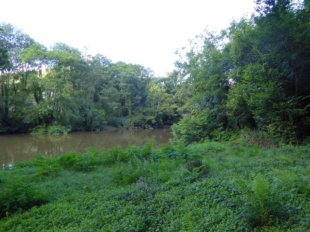 River Tamar by Hatch Wood