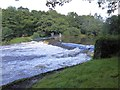SX4371 : River Tamar at Gunnislake Weir by David Smith
