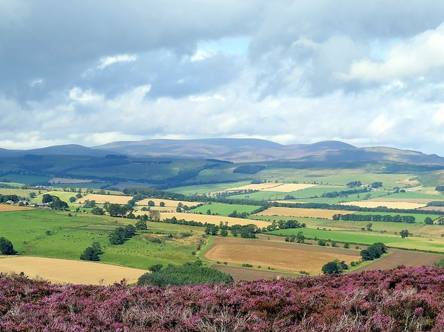 The Cheviot Hills from Hard Nab