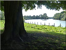 TQ1873 : The River Thames south of Richmond by Mat Fascione