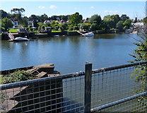TQ1672 : River Thames at Strawberry Hill, Twickenham by Mat Fascione