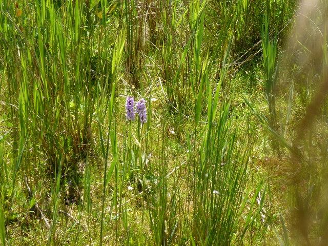 Orchids in situ