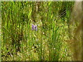 TF1707 : Orchids in situ by Bob Harvey