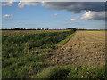 TL5669 : Maize and stubble by Hugh Venables