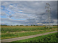 TL5264 : Maize and pylons by Hugh Venables