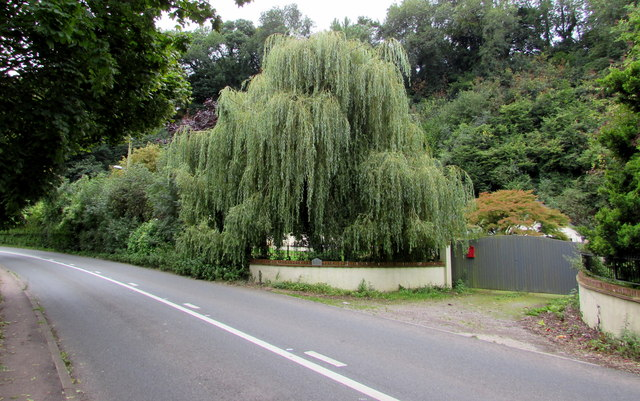 Weeping willow, Usk