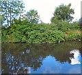 SJ9397 : A habitat for moorhens by Gerald England